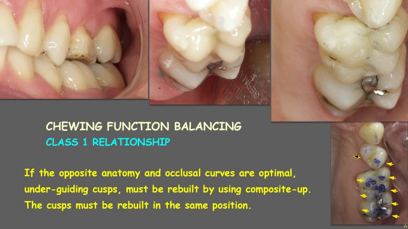 Mastication: Clinical Protocols – THE OCCLUSAL FUNCTION