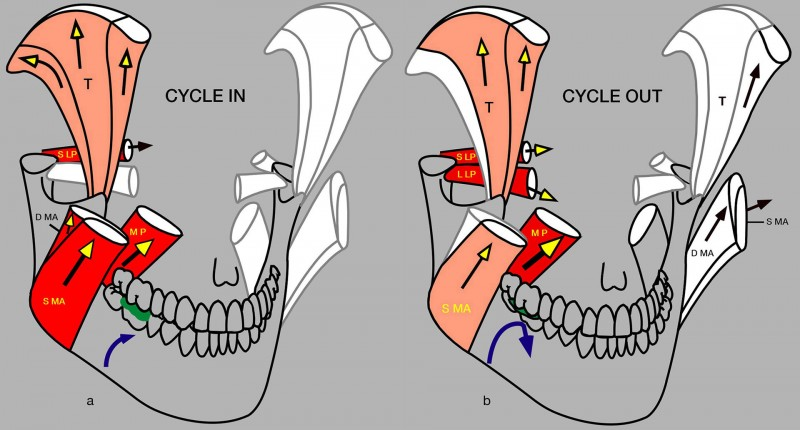 Cycle in out - copie